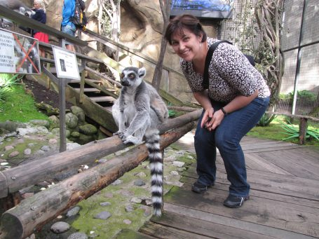 Look, a lemur!